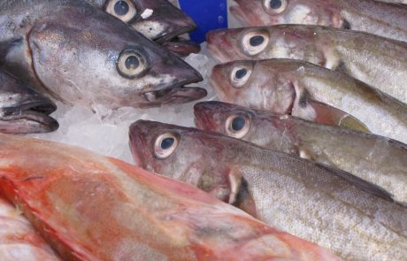 Fish may struggle to face climate change