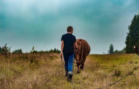 L'UE au secours des jeunes agriculteurs