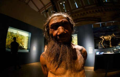 Scientists to grow mini Neanderthal brains