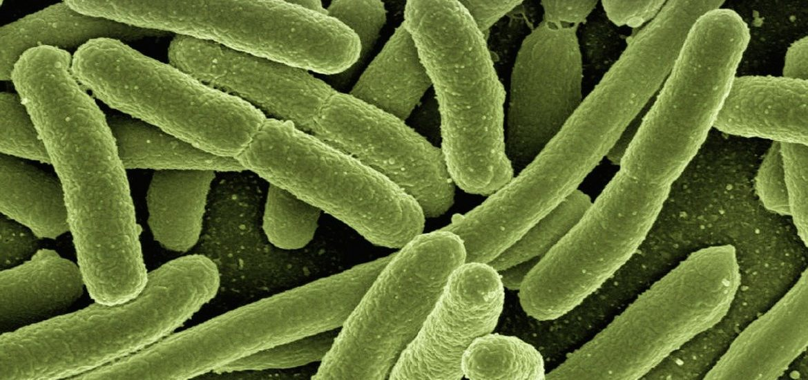Killing superbugs: old antibiotic may be the answer