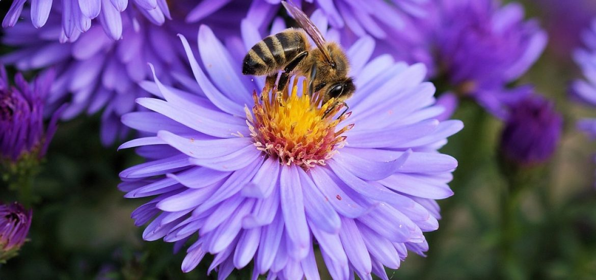 Virtual tool to help bees