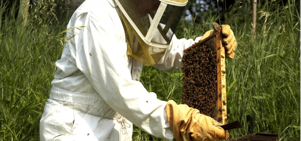 An Irish agtech startup is helping beekeepers more effectively manage their hives