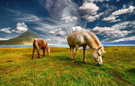Horses domesticated in northern Caucasus in 2000 BC