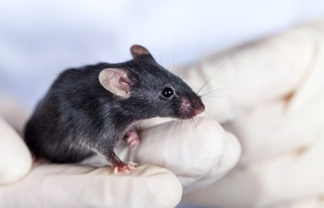 Refined CRISPR gene editing technology prevents hearing loss in mice