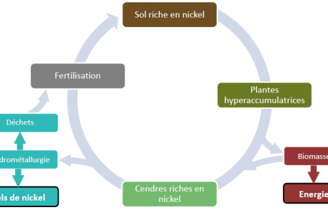 L'agromine: dépollution des terres et extraction minières par les plantes