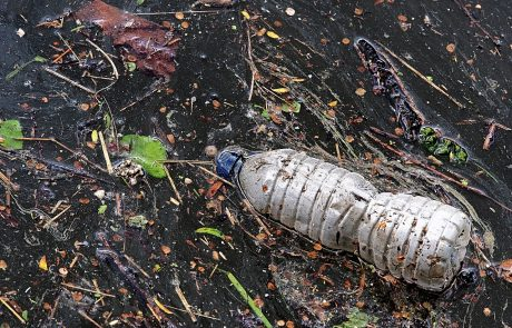 River litter serves as a home for many insects