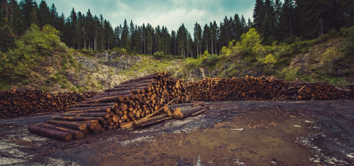 """A critical flaw"" in EU climate policy: renewable energy directive poised to promote global deforestation"