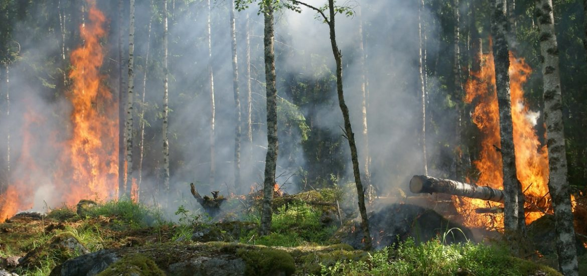 Sweden is using military force to quell an implacable enemy: forest fires