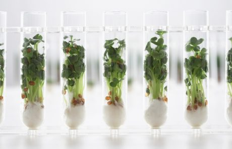Why do genetically identical plants exhibit different physical characteristics?