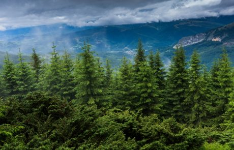 NASA laser to create most detailed 3D map of the Earth's forests yet