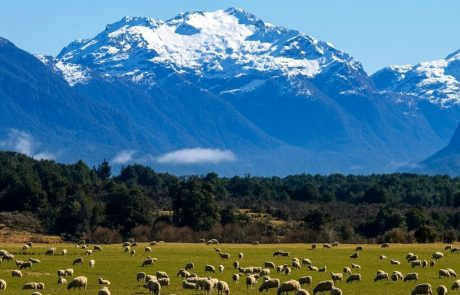 New Zealand applauded for passing 'historic' zero-carbon bill