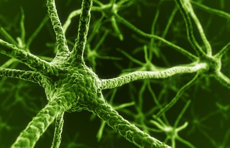 Reprogrammed stem cells implanted in patient with Parkinson's for the first time