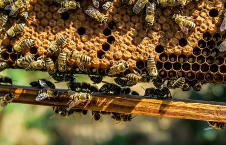 EU bans neonicotinoid pesticides linked to harming bees