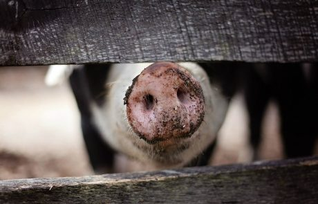 Environmental groups call for EU animal farming reform