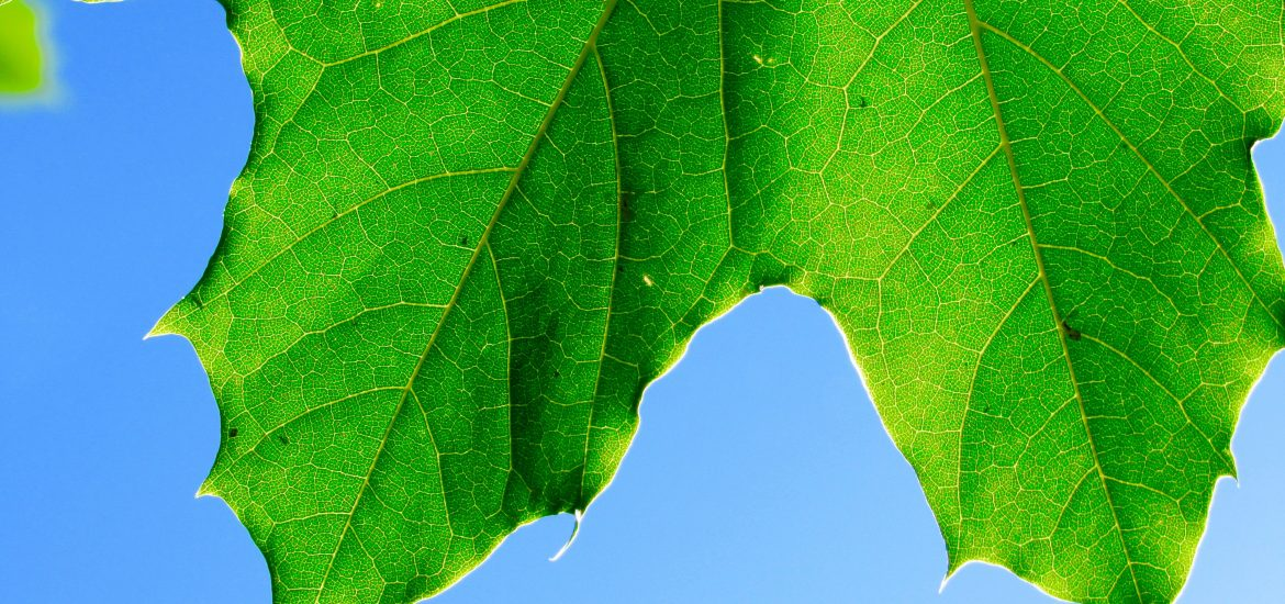 Scientists discover new type of photosynthesis