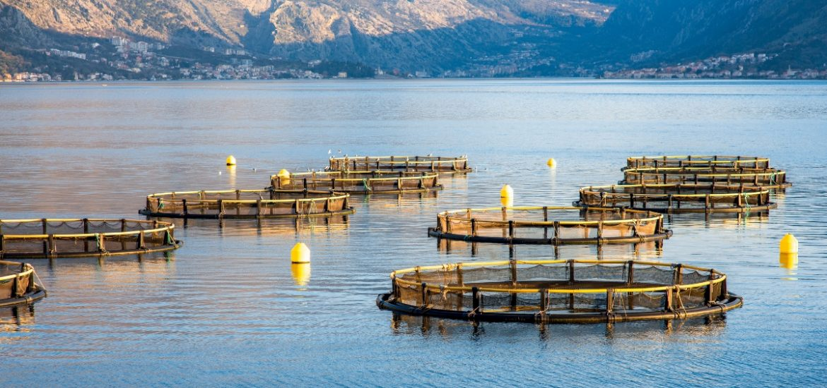 Modelling the impact of climate change on global marine aquaculture production