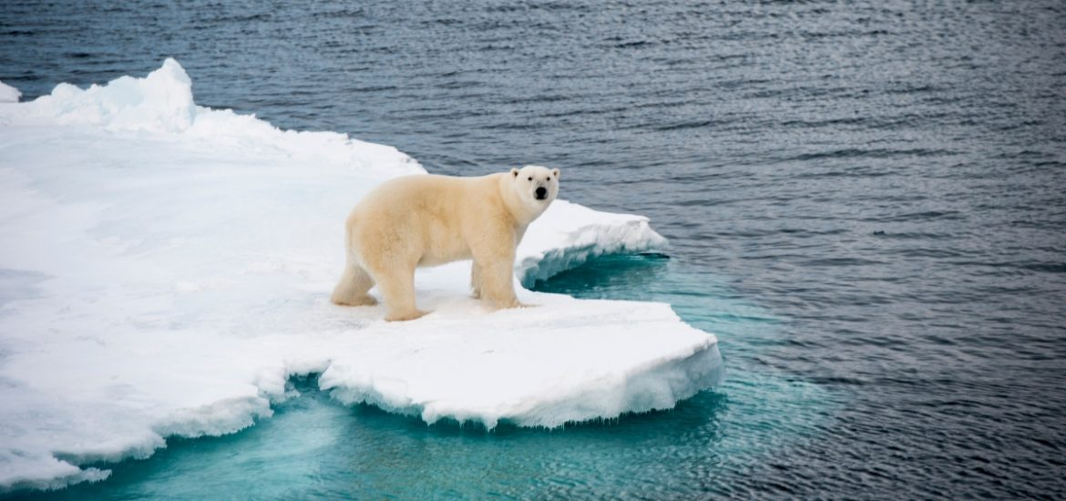Arctic ice is melting too quickly and disrupting the Transpolar Drift
