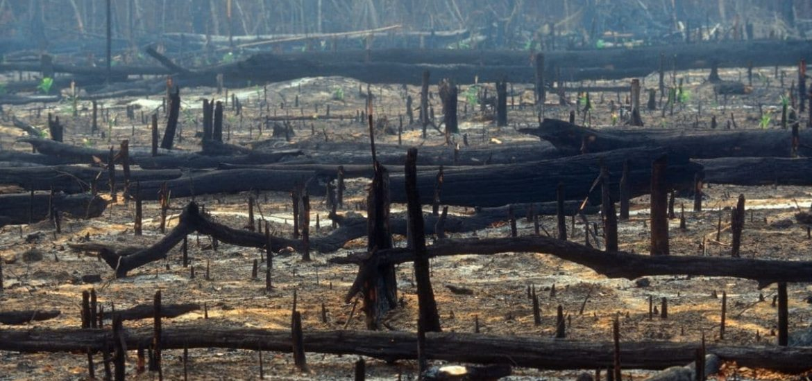 World's banks are funding biodiversity loss and ecosystem destruction
