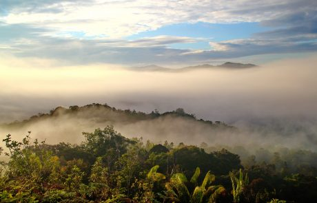 Even selective logging in rainforests hurts biodiversity