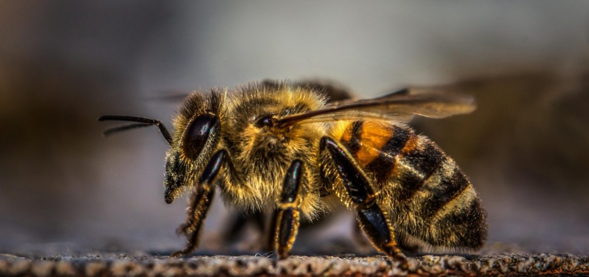 Brainy bees: honeybees can add and subtract, a new study suggests