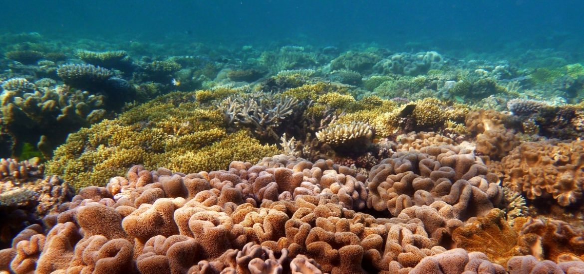 Coral reefs damaged by global warming are unable to recover fast enough