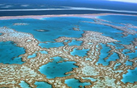 Rising ocean temperatures may have detrimental effects on coral reefs at extremely low depths