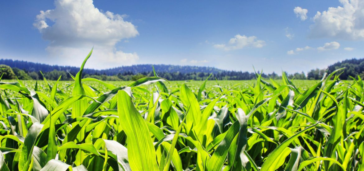 Progress in sustainable agriculture: high-performing soil microbes boost plant growth and may reduce the need for energy-consuming fertilizers