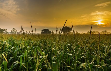 Air pollution from corn production is a major contributor to premature mortality