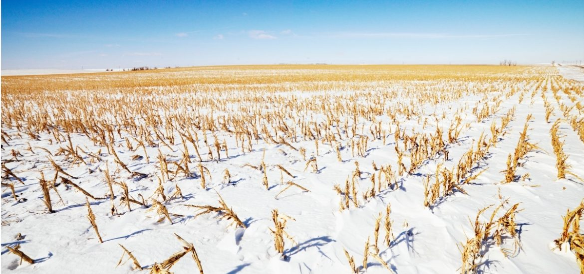 Cover crops may be increasing winter temperatures