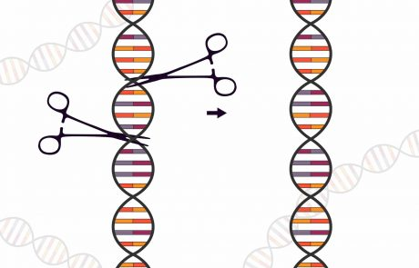Genome editing biotechnologies: UEAAcalls for a revision of European regulations on genetically modified organisms.