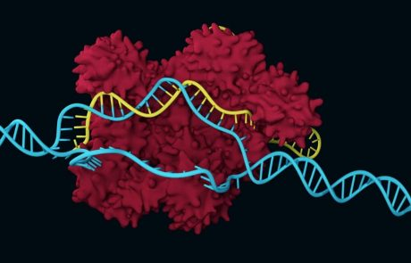 CRISPR-Cas 9 corrects genetic defects in mice
