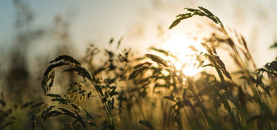 A global system to protect the world's food supplies from crop diseases