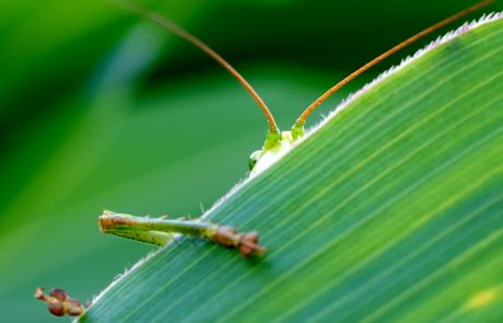 Intensification of agriculture is the main driver of declining insect numbers