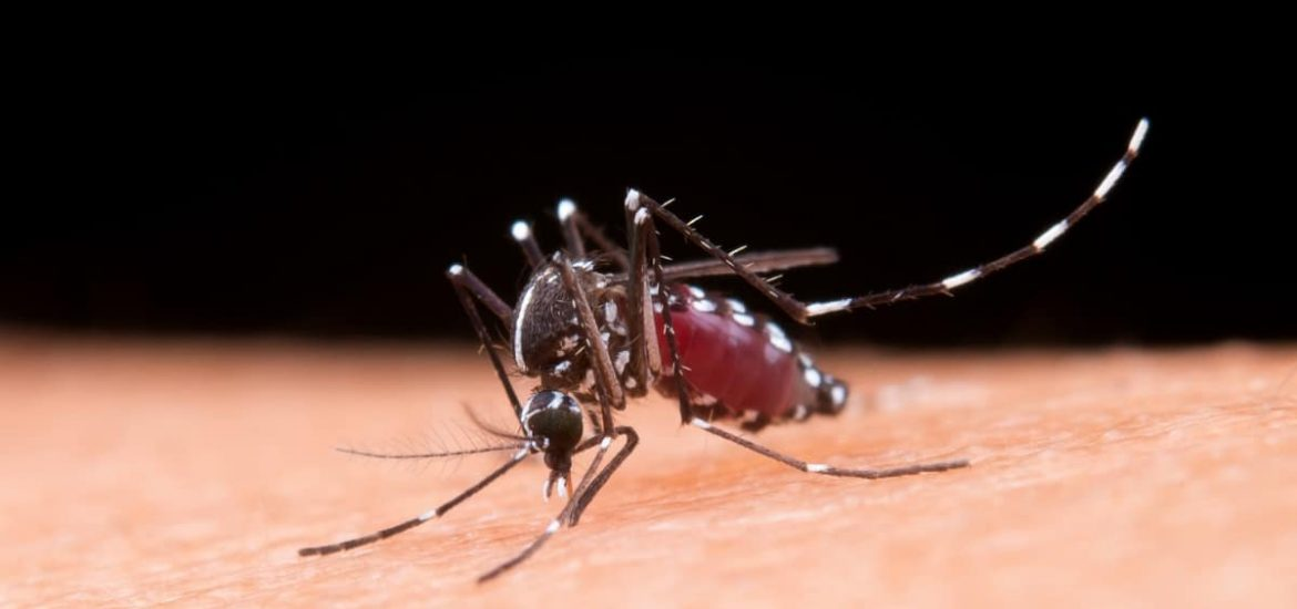 Can scientists completely eradicate disease-carrying mosquitoes?