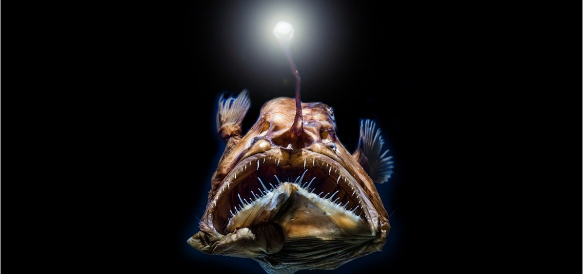 Deep-sea fish living in near darkness have evolved incredible vision