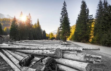 'Abrupt increase' in harvested forest area threatens Europe's climate goals