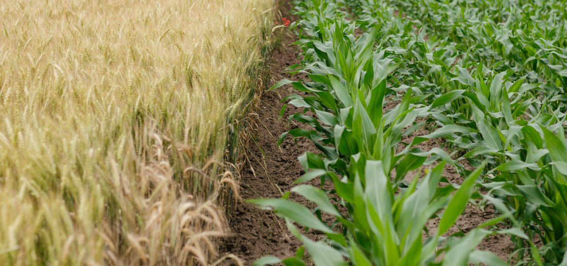 Scientists increase crop production by 47%