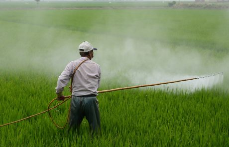 Exposure to herbicide ingredient may shorten pregnancy