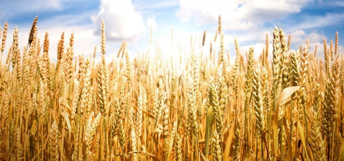 Nutritional benefits of cereals are often 'overlooked' and 'undervalued'