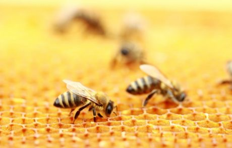 Decline of the honey bee: number of colonies fell by 16 per cent