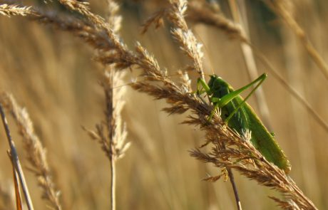 Global warming expected to increase insect numbers which could pose a threat to global food security, new model predicts