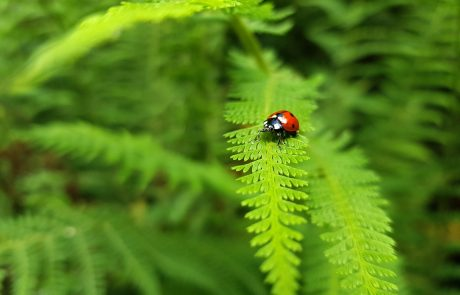 Limiting global warming to 1.5°C would protect biodiversity