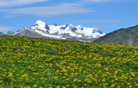Europe's mountaintops in bloom due to warming