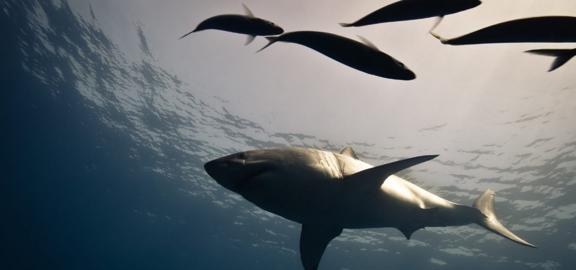 Marine conservation: tracking species migration and protecting biodiversity