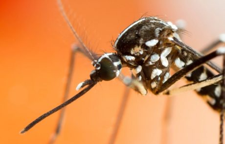 How will climate change affect the global spread of disease-carrying mosquitoes?