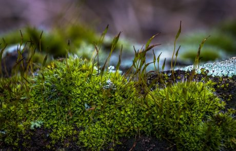 Moss found to remove arsenic from drinking water