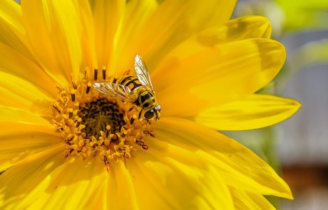 New EU analysis says pesticides threaten bees