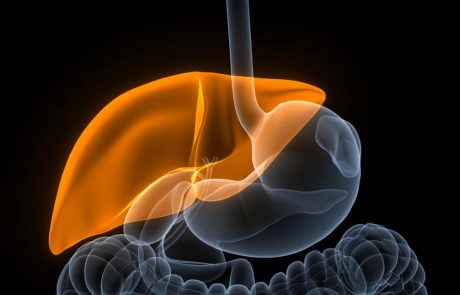 Newly identified cell type may be the key to regenerating the liver