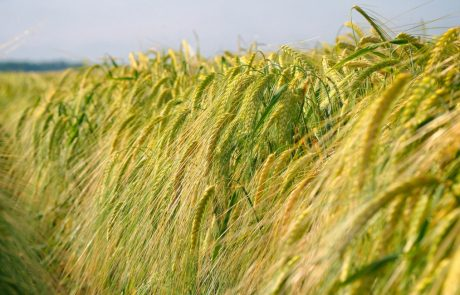 Higher atmospheric CO2 levels are leading to less nutritious crops