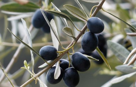 "EU says US tariffs on Spanish olives are ""unacceptable"""